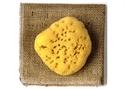 Picture of S2 Natural Sponge, medium